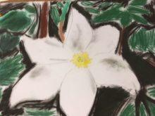 Juzkova - Narcis.jpg