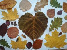 Podzim - 38.jpg