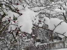 zima - IMG_20190110_131408.jpg