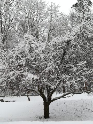 zima - IMG_20190110_131424.jpg