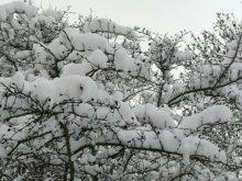zima - IMG_20190110_135854.jpg