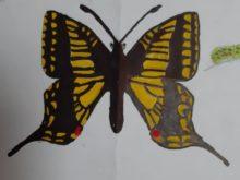 Motýli - Pr_1