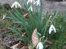 jaro,velikonoce - 20210329_1843541-1