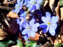 jaro,velikonoce - IMG-20210411-WA0004